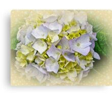 Variegated Lace Cap Hydrangea - Blue and Yellow Canvas Print
