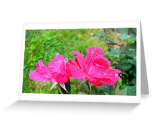 Rain on Roses Greeting Card