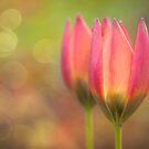 Species Tulips by Beth Mason