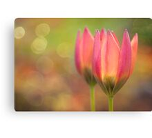 Species Tulips Canvas Print