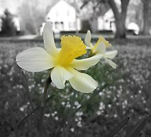 Daffodils with Street Scene (Black and White with Color Focus) by CrystalFanning