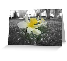 Daffodils with Street Scene (Black and White with Color Focus) Greeting Card