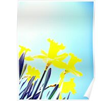 Daffodils in the Sky (Light) Poster