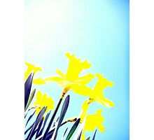 Daffodils in the Sky (Light) Photographic Print