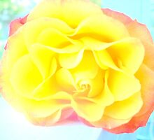 Rose on a Railing (Light) by CrystalFanning