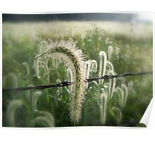 Dew Covered Field (Soft Focus) Poster
