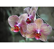 Orchids - tropical epiphytic Photographic Print