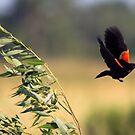 Flight of the Black Bird by Anthony Roma