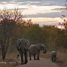 African Elephant Family at Sunset by Rob  Southey
