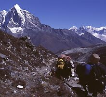 Yak train in the Everest region of Nepal by Terry Rodger Smith