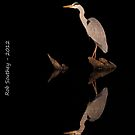 Heron by night by Rob  Southey