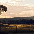 Late Afternoon Delight, Scarsdale, Victoria, Australia by haymelter