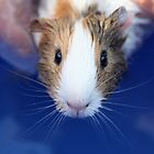 Guinea pig Whiskers by mensoart
