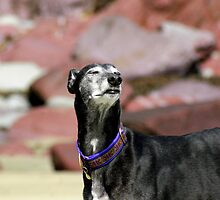 Supreme Sighthound by Sally J Hunter