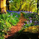 Bluebell Glow by hebrideslight