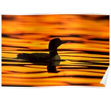 Loon at Sunrise Poster
