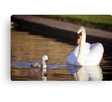 Swans of Llanfairfechan Canvas Print