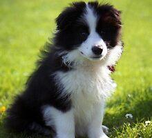 Puppies of Llanfairfechan. by Michael Haslam