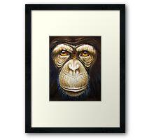 primate-chimpanzee Framed Print