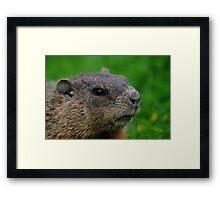 Woodchuck Profile Framed Print