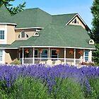 Purple Ridge Lavendar Farm by Susan Vinson