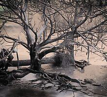 Edisto Beach - Botany Bay by photosan