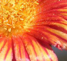 Untitled by ladybugtux