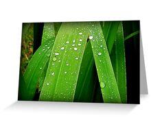 Rain Drops... Greeting Card