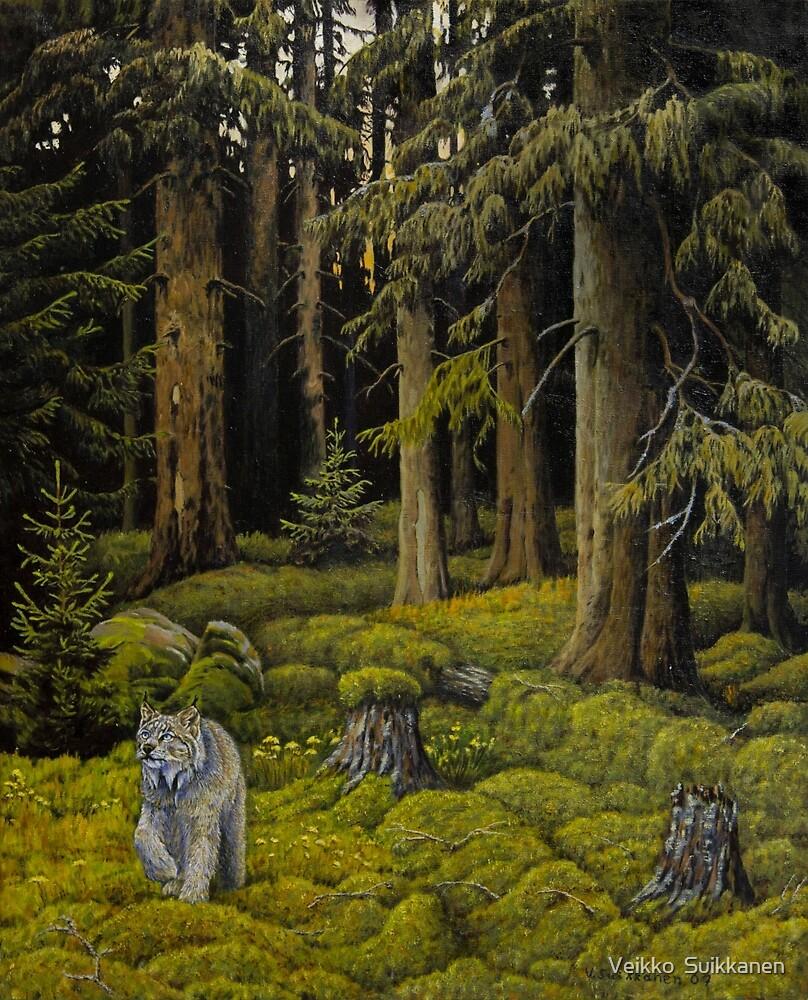 Evergreen Forest by Veikko  Suikkanen