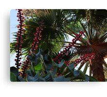 Tropical Blossoms, Bushes, Trees - Flores, Arbustos, Arboles Tropicales Canvas Print