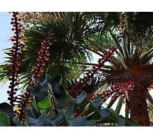 Tropical Blossoms, Bushes, Trees - Flores, Arbustos, Arboles Tropicales Photographic Print