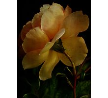 Roses of Life Photographic Print