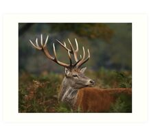 Majestic Red Deer Art Print