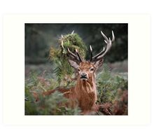 Red Deer Antler Adornment Art Print