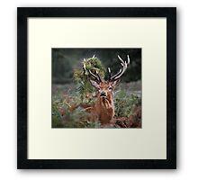 Red Deer Antler Adornment Framed Print