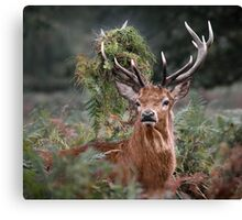 Red Deer Antler Adornment Canvas Print