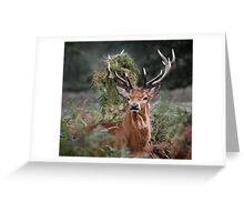 Red Deer Antler Adornment Greeting Card
