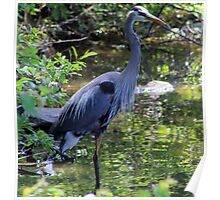 Another Inner City Heron Poster