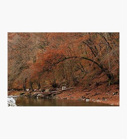 Red autumn along the river Photographic Print