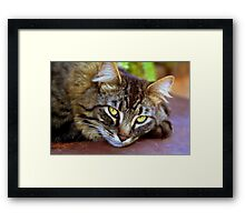 Hanging out on the deck Framed Print
