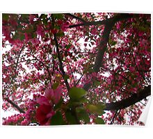 Lush cherry blossoms Poster