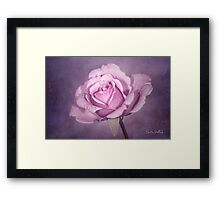 Tinted Rose with Textured Background Framed Print
