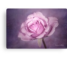 Tinted Rose with Textured Background Canvas Print