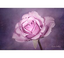 Tinted Rose with Textured Background Photographic Print