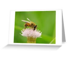 hoverfly and thistle Greeting Card