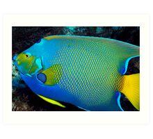 Queen Angel Fish Art Print