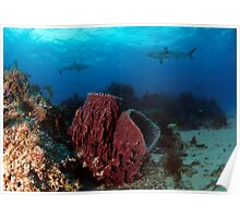 Fish Tail Reef Poster