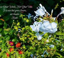 Raise Your Words, Not Your Voice - Rumi (greeting card and inspirational print) by Scott Mitchell