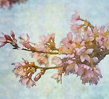 Soft Cherry by Helen K. Passey