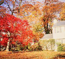 NY autumn by terezadelpilar~ art & architecture